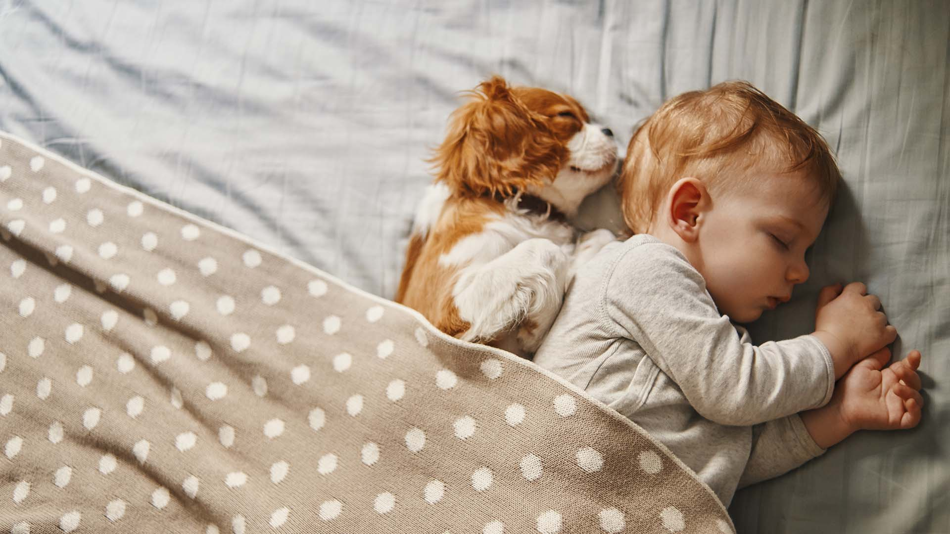 Young child snuggled up with a little dog sleeping.