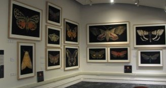 Butterfly frames on wall